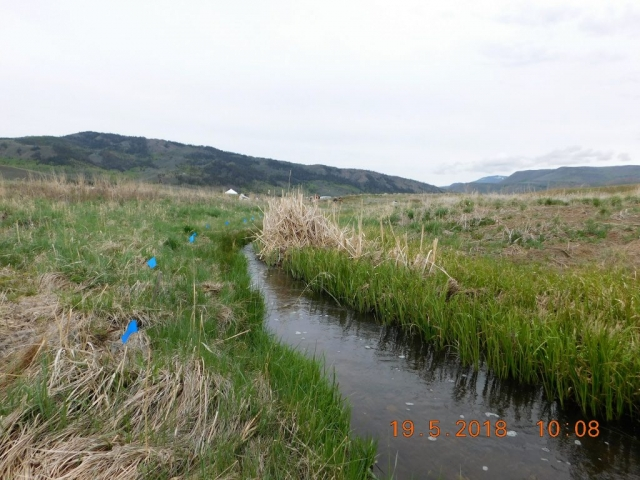 Far end of adopted area of Smith Creek with blue flags for future willow plant locations