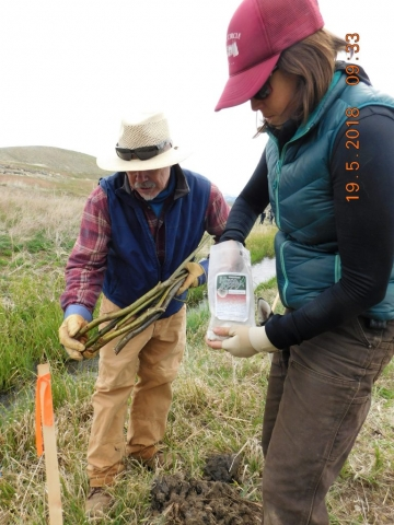 UCRWG's - Upper Colorado River Watershed Group - Geoff Elliott and Tiffany Gatesman prep willows for planting
