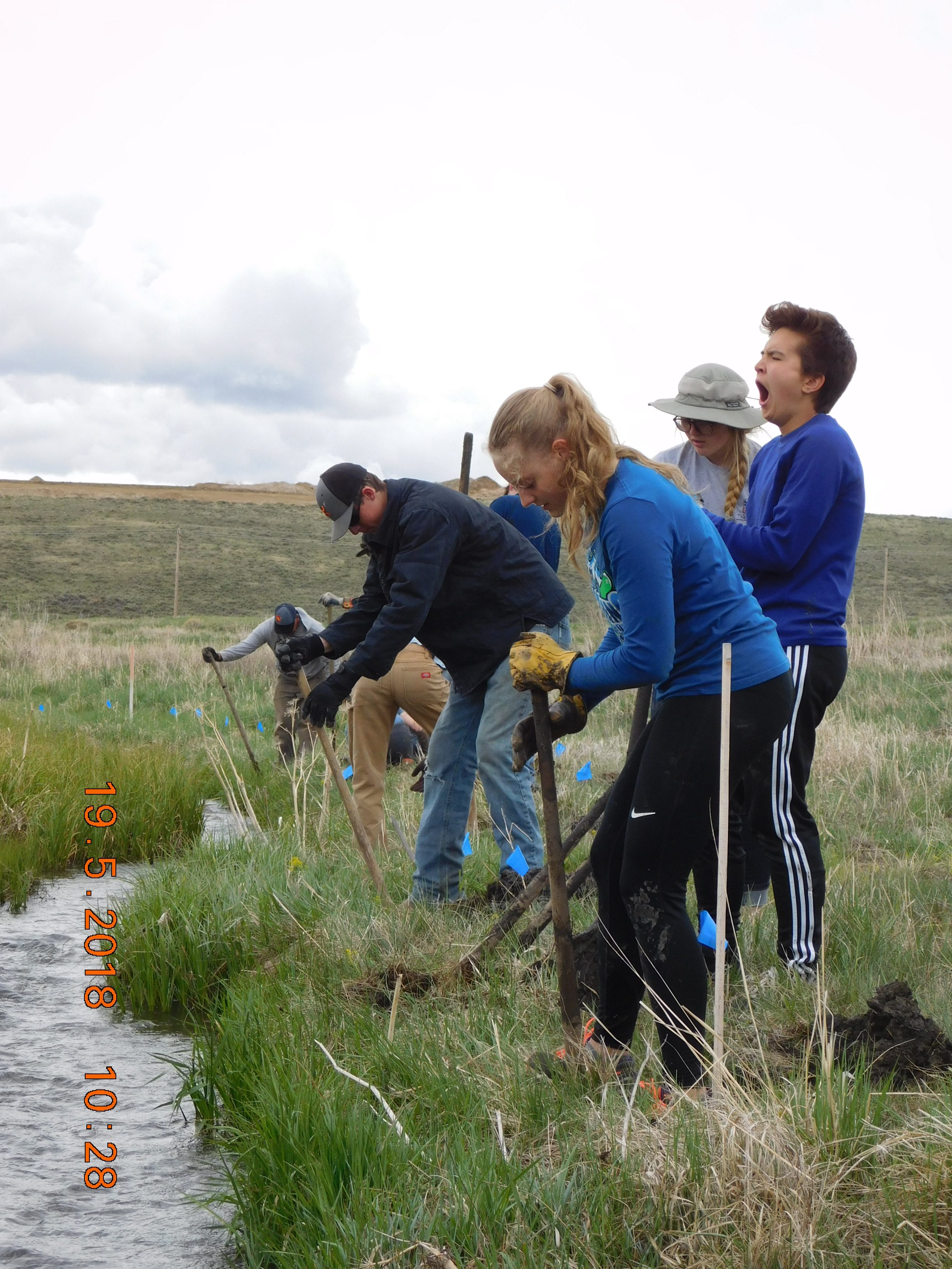 Digging Holes along Smith Creek for willow planting